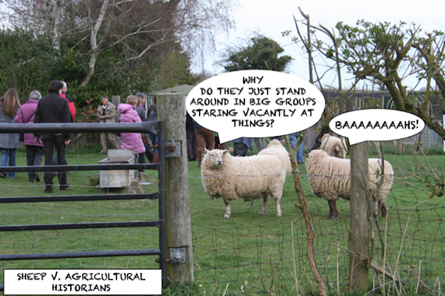 Sheep v. agricultural historians: one sheep to another: 'Why do they just stand around in big groups staring vacantly at things?' Other sheep: 'BaaaaHS!'