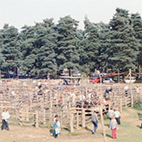 New Forest Pony Sale
